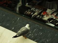 Waiting (Lidia Mol Rod) Tags: animal animalphoto animalphotography seabird bird fish waiting lifestyles warmcolors