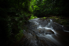 Streaming 流不息 (kaising_fung) Tags: forest woods stream creek waterfall greens canopy