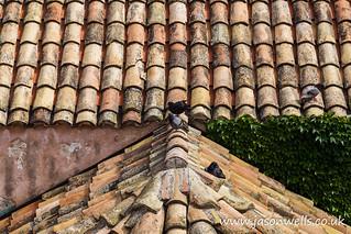 Slooping terracotta roof
