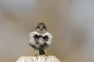 J'aime les oiseaux! / I love birds!