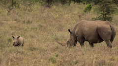 unbenannt-1545 (ovg2012) Tags: kenyake nairobi nairobinationalpark