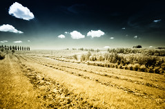 Listless day (citrusjig) Tags: pentax kx sigma1020mmf456 bw090redfilter infrared irconverted fullspectrum wisconsin farmland