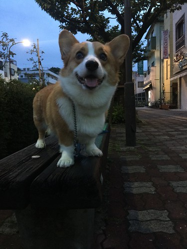 EIN お散歩なう♪