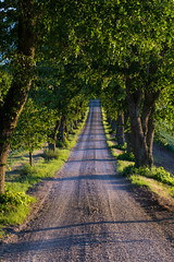 Road leading into nowhere (JimmyBrandt) Tags: trees road either side green sweden sverige nikon d7100