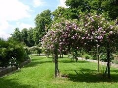Rose garden (Linda DV (away)) Tags: lindadevolder plantentuin nationalbotanicgardenofbelgium 2017 nature geotagged garden belgium meiseplantentuin meise panasonic lumix ribbet rosa rosaceae rosales