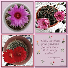 """Enjoy watching your garden's flowers share their lovely smiles."" (martian cat) Tags: fdsflickrtoys ribbet succulent inspirational ©martiancatinjapan allrightsreserved© macro flower nature succulents ©allrightsreserved martiancatinjapan© balconygarden mybalconygarden gardening hobby beauty ☺allrightsreserved allrightsreserved epiphylium cactus ☺martiancatinjapan martiancat martiancat© ©martiancat martiancatinjapan motivational motivationalposter creativity"