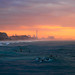 Surfers at sunset - Tel-Aviv beach