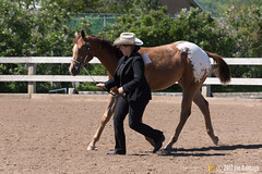 JBC_8270.jpg (Jim Babbage) Tags: krahc annualshow appaloosa horses