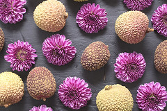 Lychee Fruit and Purple Garden Mums on a Slate Backsground (Transient Eternal) Tags: chrysanthemum evergreen litchi lychee plants background bumpy china chinesefruit daisies daisy decor fleshy flower flowers foodart fruittree gardenflower gardenmums good healthyfood lizhi liche liechee mums nature nutrition nutritious patterns petals pink purpleflower purplemums roughtexture slimy slippery soapberry softness sweet textured tree tropical tropicalfruit velvtyedible