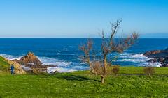 El árbol hablaba (Jesus_l) Tags: europa españa galicia acoruña mar costa arbol jesúsl