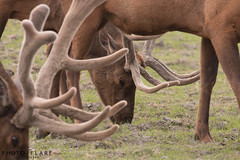 alaska toutr day 5 (6 of 18) (Photo-Flare) Tags: alaska ny newyork personalvacationphotographer phototours photographyfortravelers vacationphotographer wildlifephotographers honeymoonideas