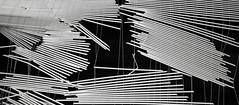 Blinds, Portland (austin granger) Tags: blinds portland miniblinds broken slats lines pattern abstract string evidence film xpan geometry ruin