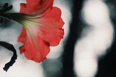 (King Arthur Photography) Tags: smallflowers flowers flower nice pretty macro beautiful bokehbackground pinkflower pink blur bokeh