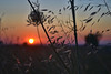 Sunset (Can Bozkır) Tags: sunset nikon d3100 dslr digital nikondigital nikondslr nikond3100 turkey thrace trakya europe summer composition landscape interesting lighting dusk