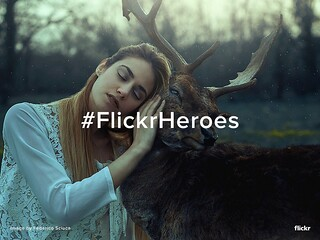 Flickr Heroes of the Week