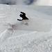 Slashing Powder Whistler Bowl