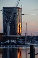 Water world (Paul Threlfall) Tags: docklands melbourne victoriaaustralia sunset water seagulls chroicocephalusnovaehollandiae silvergull crane boats victoriaharbour