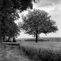 mamiya240 (salparadise666) Tags: mamiya c330 sekor super f45 4sec fuji neopan acros 100 caffenol rs 15min nils volkmer vintage camera film medium format square 6x6 tlr tree nature landscape monochrome bw black white view rural 180mm