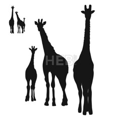Three Giraffes Silhouettes (Hebstreits) Tags: african animal art back background black collection contour design family giraffe giraffes group illustration isolated journey mammal nature outline print safari serengeti set silhouette silhouettes standing tanzania tattoo three vector wall white wild wildlife