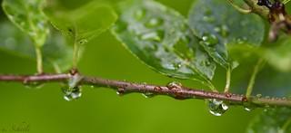 Waterdrop - Drops - Reflection