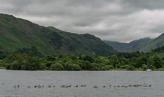 Ullswater, Cumbria (joanjbberry) Tags: ullswater cumbria lakedistrict ullswatersteamers lake mountains water trees countryside boat boattrip geese