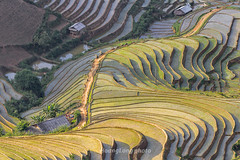 File532.0617.Lìm Mông.Cao Phạ.Mù Cang Chải.Yên Bái. (hoanglongphoto) Tags: asia asian vietnam northvietnam northwestvietnam landscape scenery vietnamlandscape vietnamscenery vietnamscene terraces terracedfields terracedfieldsatvietnam transplantingseason sowingseeds afternoon sunny sunnyafternoon sunnyweather valley flanksmountain hdr canon canoneos1dsmarkiii canonef70200mmf28lisiiusmlens tâybắc yênbái mùcangchải caophạ lìmmông phongcảnh ruộngbậcthang ruộngbậcthangmùcangchải thunglũng thunglũnglìmmông mùacấy đổnước mùacấymùcangchải đổnướcmùcangchải sườnnúi buổichiều nắng nắngchiều bóngđổ hillside sườnđồi tophill đỉnhđồi sunlight abstract trừutượng curve đườngcong home house nhà nhữngngôinhà