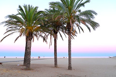 The pink hour (Fnikos) Tags: beach seashore coast waterfront pink sky sea sand palmtree people mataró outdoor