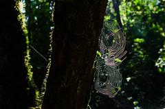 (José Mauricio Garijo) Tags: parqueecológicoaçucenadaserra aracnídeo árvores natureza mata amanhecer floresta