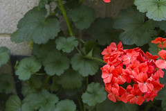 2017-06-18 Virginia Water Savill Gardens IMG_9132 (Darkstar Moody) Tags: virginiawater savillgardens plants flowers trees water ponds lakes wildlife gardens flora fauna