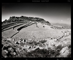 Steps (tsiklonaut) Tags: pentax 67 6x7 film analog analogue analogica analoog 120 roll medium format yemen jeemen mountains terrace rice growing agriculture remote village mountanous terrain landscape küla arabian arab peninsula desert high altitude black white negro y blanco mustvalge travel discover experience kodak trix 320 txp mono põld põllumajandus drum scan drumscan scanner pmt photomultipliertube ngc