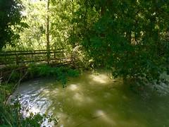 iph503 (gzammarchi) Tags: italia paesaggio natura ravenna marinaromea puntealberete lago fronda ramo riflesso ponte