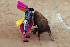 Capeando (aficion2012) Tags: istres france francia corrida toros bull fight bullfight toro juan pedro domecq elfundi fundi el capote capear matador torero toreo tauromaquia tauromachie