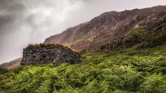 Roof garden ... (Einir Wyn Leigh) Tags: building green ferns mountains country wales rural foliage flowers valley cymru light ruin stone landscape rugged clouds rain