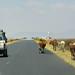 Somali Region (Ethiopia) - Highway