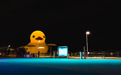 Giant Rubber Duck (dtstuff9) Tags: toronto ontario canada day giant rubber duck lake harbourfront harbour hto park yellow water big large oversize night lights