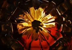 Glass Bottom Flower - HMM..x (Lisa@Lethen) Tags: bottoms up happymacromonday macromonday glass light flower hmm abstract