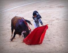 Natural (aficion2012) Tags: istres francia france corrida bullfight bull toro toros taureau fundi elfundi juan pedro domecq tauromachie tauromaquia matador torero toreo natural