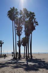 halo on fire (tamasmatusik) Tags: palmtrees beach halo sunlight venicebeach losangeles palm flare shine march spring sonynex sony nex3n 25mm nature shore shadow