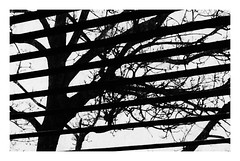 LINES! (Ageeth van Geest) Tags: bw blackandwhite nature window reflection tree black white zwart wit