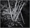 Fotografía Estenopeica (Pinhole Photography) (Black and White Fine Art) Tags: aristaedu400 pinhole6214x214 pinhole03mm niksilverefexpro2 lightroom3 camaraestenopeica pinholecamera estenopo agujero sanjuan oldsanjuan viejosanjuan puertorico