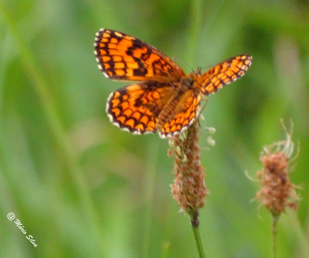 Águas Frias (Chaves) - ... a borboleta ...