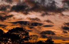 DSC_0331 (DanielaRuiz98) Tags: sky dusk clouds sunset nikon colombia trees silhouttes