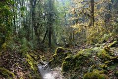 Alice in the Wonderland (munjean) Tags: nepal treking hiking forest green wonderland annapurnabasecamp