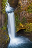 Graceful (sierrasylvan) Tags: adobe adobebridgecc2017 adobelightroomcc2015 adobephotoshopcc2017 canon canonefs1585mmf3556isusmlens canoneos50d cokinzprofilterholder filters cokin hoyahdcircularpolarizingfilter hoya lee leefilter9nd foothills cascadefoothills mountains cascaderange oregon douglascounty thecascades plants moss fern river northumpquariver trees cedar westernredcedar tripod manfrotto manfrotto190xprobtripod manfrottobasicpantilthead waterfall vivitar vivitarwirelessshutterreleasevivrc200 blue autumncolors2015 autumncolors autumn black bluff landscape green gray forest cascades cliff hiking nature orange outdoor red rocks rockformation stream water wildlife yellow toketeefalls fir douglasfir