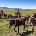 Donkey traffic