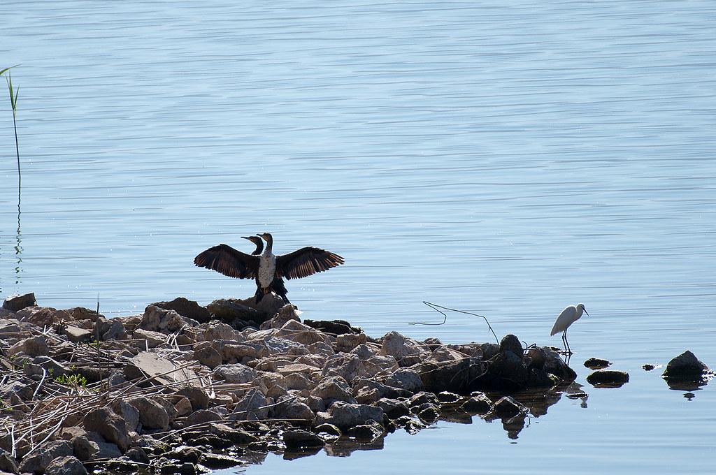 фото: Prespa birds