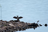 Prespa birds (akk_rus) Tags: 200500mmf56gvr nikkor200500mmf56gifedafsvr nikkor 200500mm nikon d800 nikond800 prespa lake macedonia македония преспа озеро преспанско езеро преспанскоезеро prespasee nature bird birds птица природа cormorant баклан