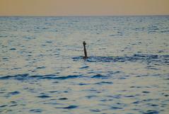 [ Ancora 5 minuti - 5 minutes more ] DSC_0691.R2.jinkoll (jinkoll) Tags: sea swim swimming hand harm blue horizon manny gloaming sunset paradise heaven tropea calabria water waves