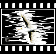 egret (firstlookimages) Tags: abstractnature abstract natureportrait art artistic artisticmanipulation digitalmanipulation digitalart digitalphotography detail egrets