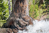 Eagle Falls trunk (jimmy_racoon) Tags: 1785mm is canon xsi eagle falls emerald bay lake tahoe landscape nature tree trunk 1785mmis canonxsi eaglefalls emeraldbay laketahoe